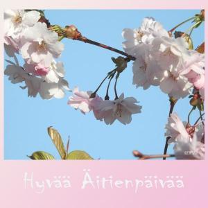 Äitienpäivä kirsikan kukat