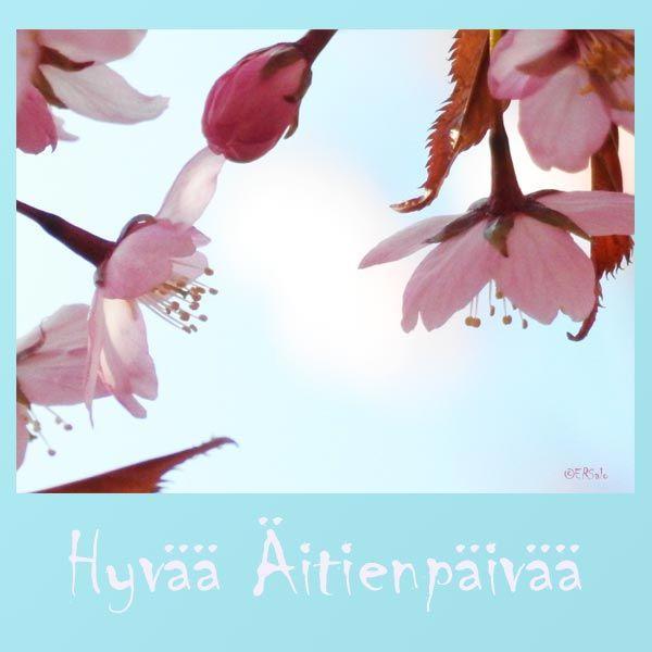 Kirsikkojen aikaan