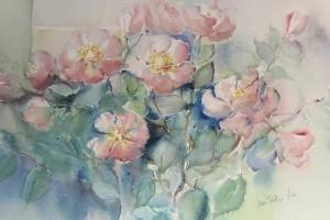 Pihakukka-akvarellit