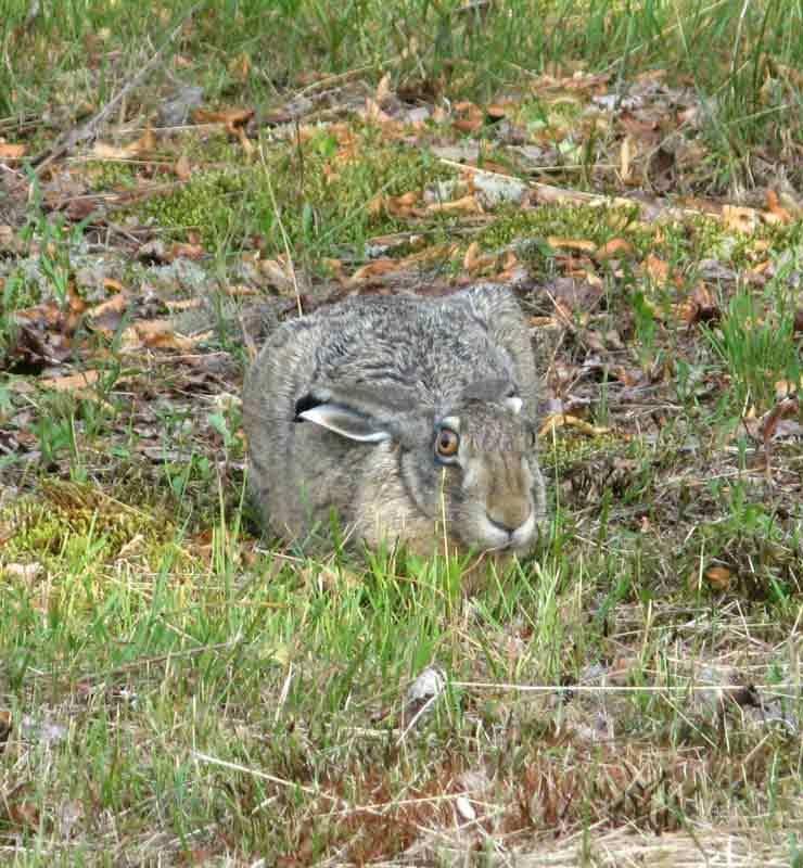 Pupu katsoo ruohon korren takaa kuin olisi luullut olevansa piilossa